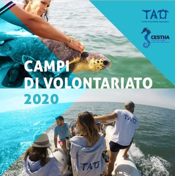 Campi di Volontariato per le tartarughe marine in alto Adriatico (Italia)